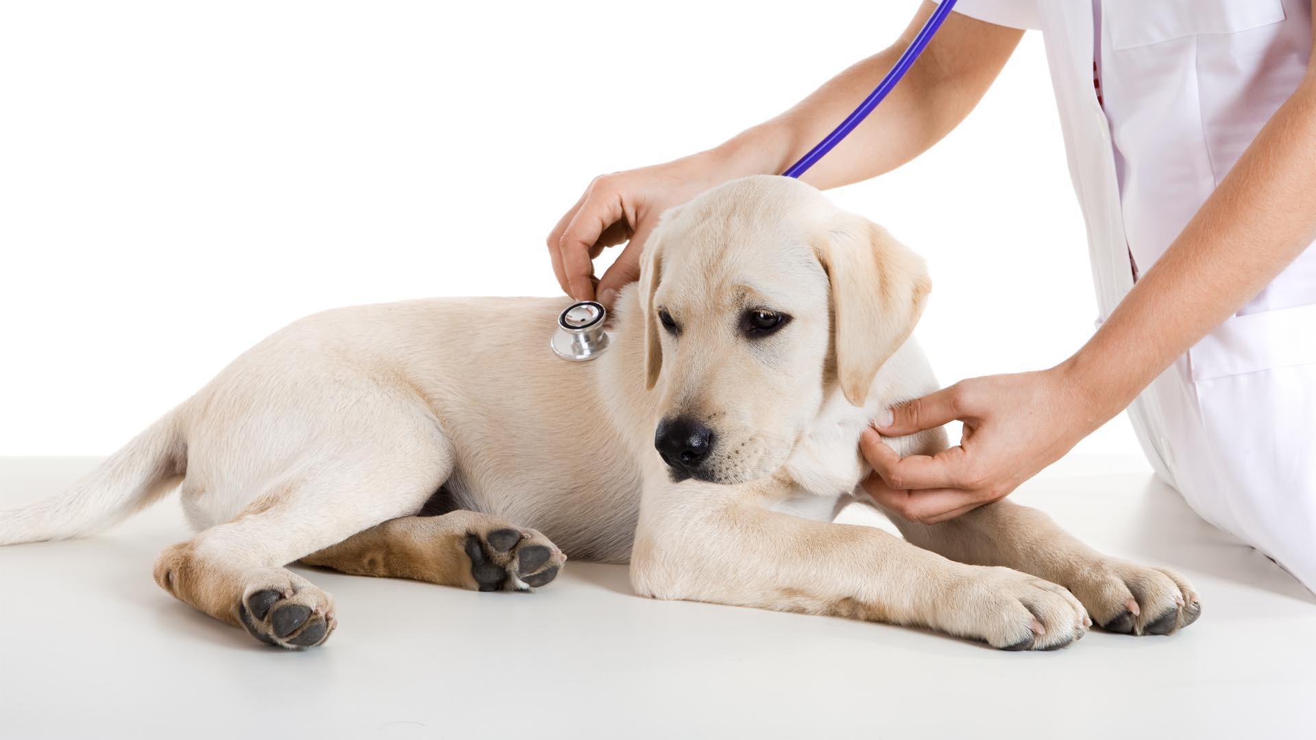 clinical-dog-efc