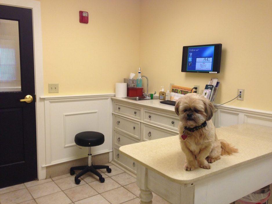 clinical-dog-vet-office